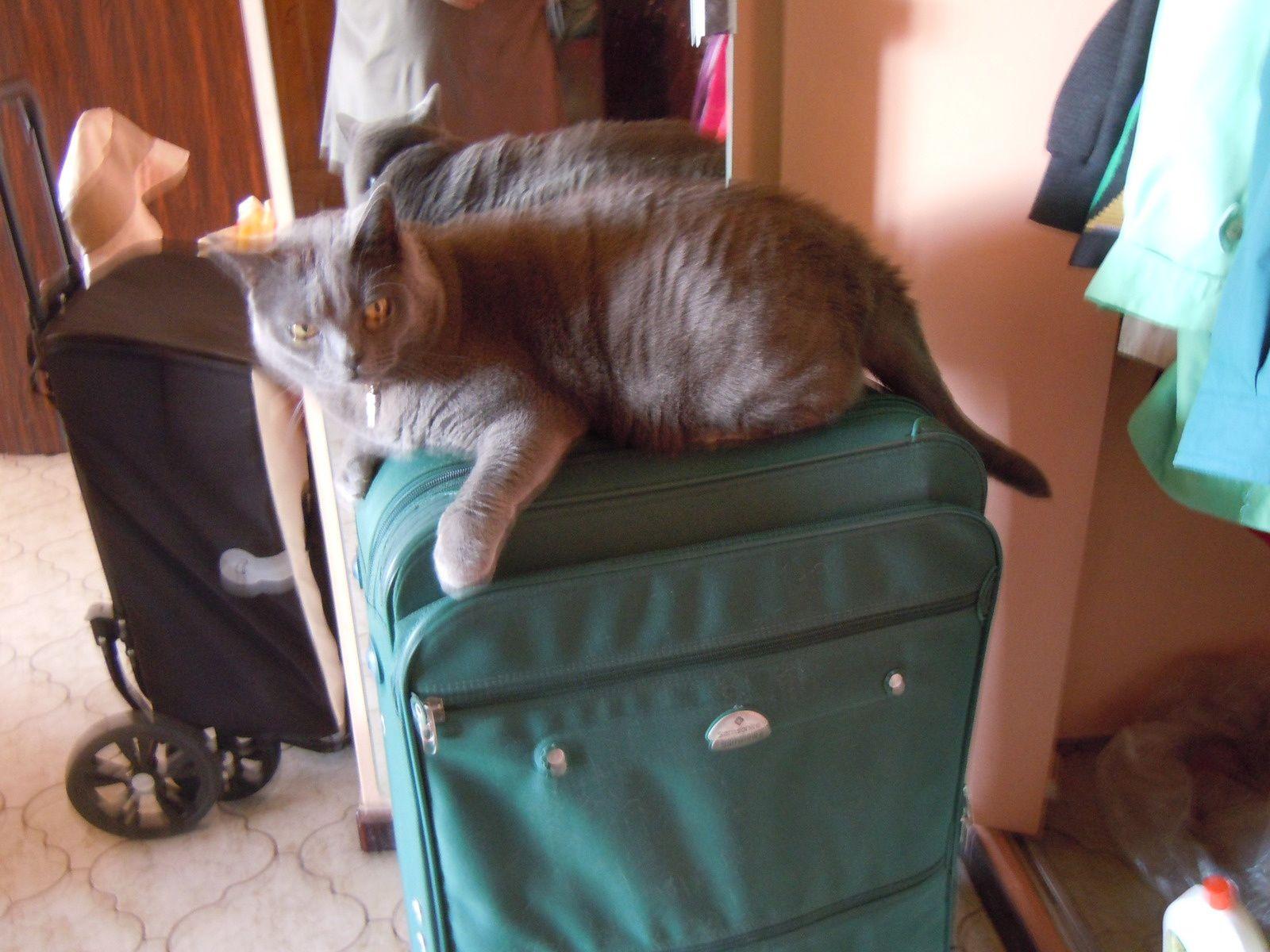 Sacha qui ne quitte pas la valise de peur d'être oublié ;)