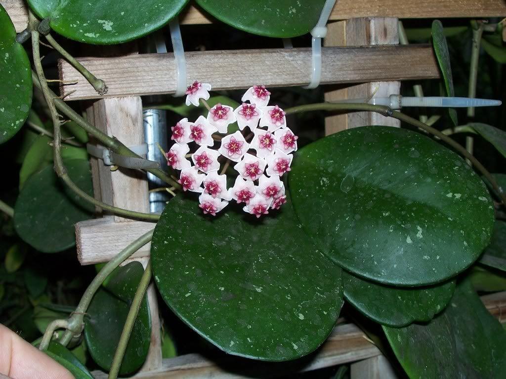 photos du web pour vous montrer a quoi devront ressembler les fleurs plus tard.