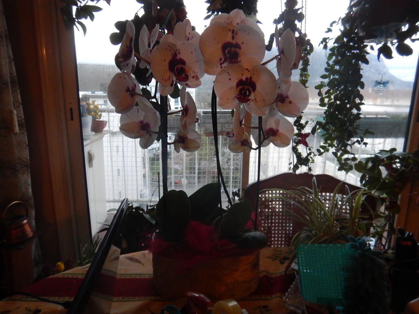 Magnifiques orchidées reçu par ma maman