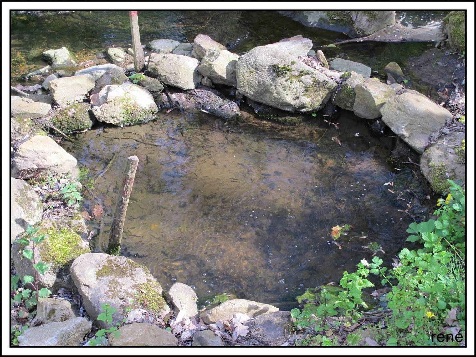 La source(Photos de René)