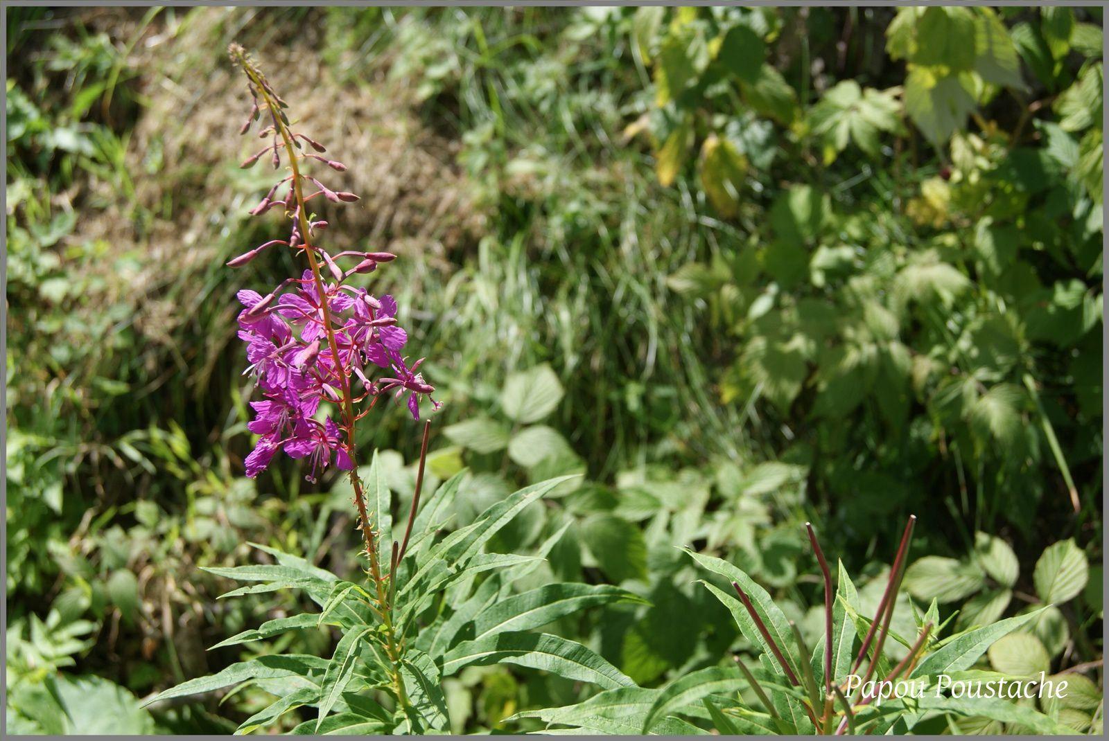 La faune et la Flore autour du Mont Dore