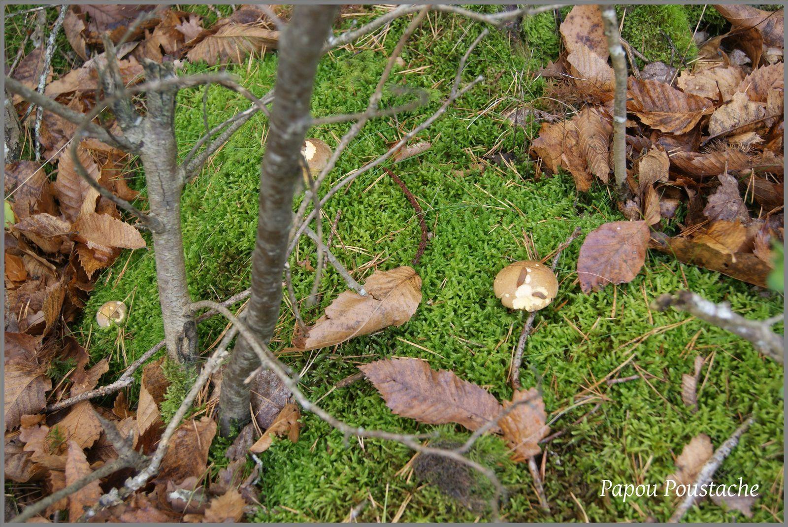 Randonnée des feuilles mortes