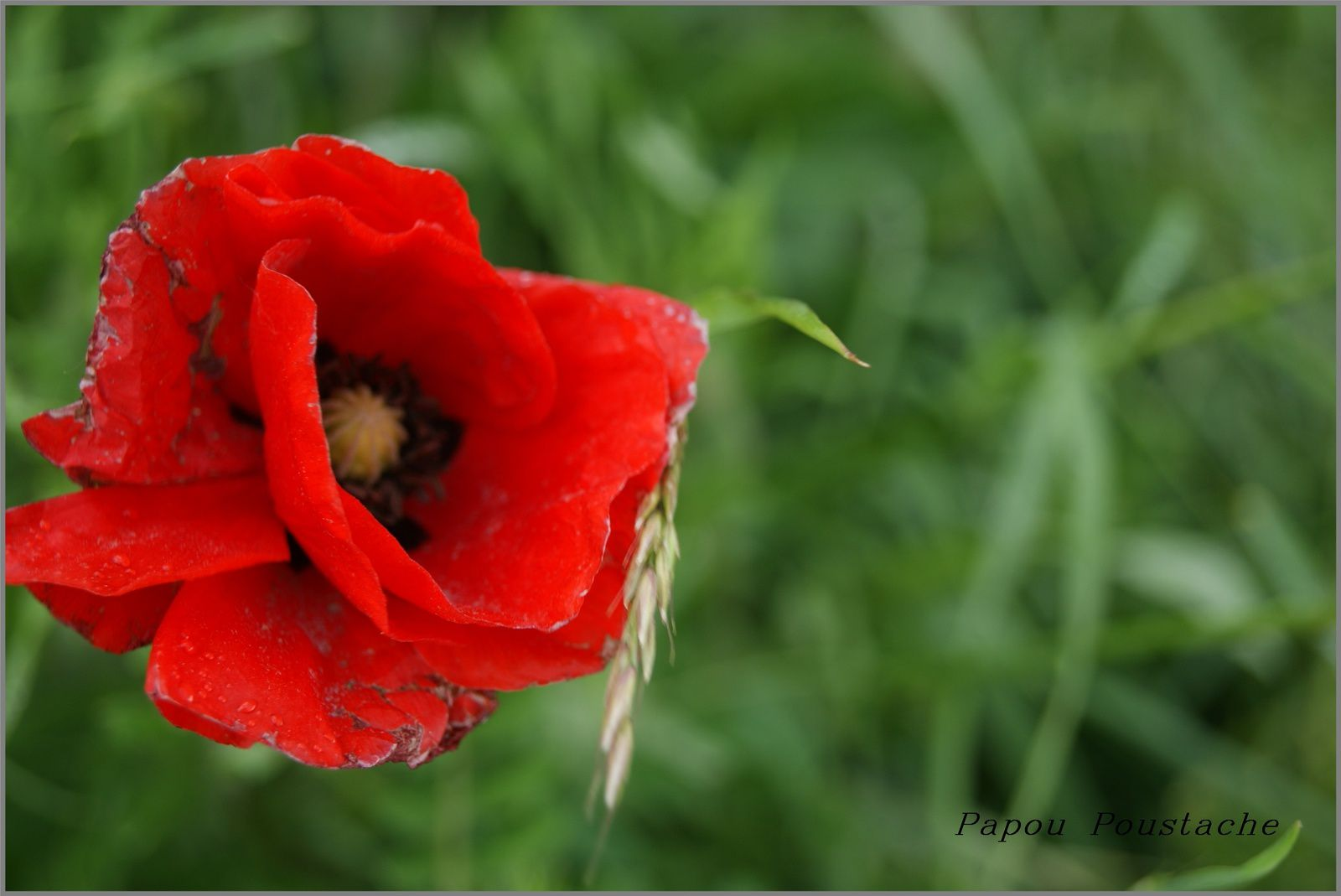 Un printemps en Auvergne