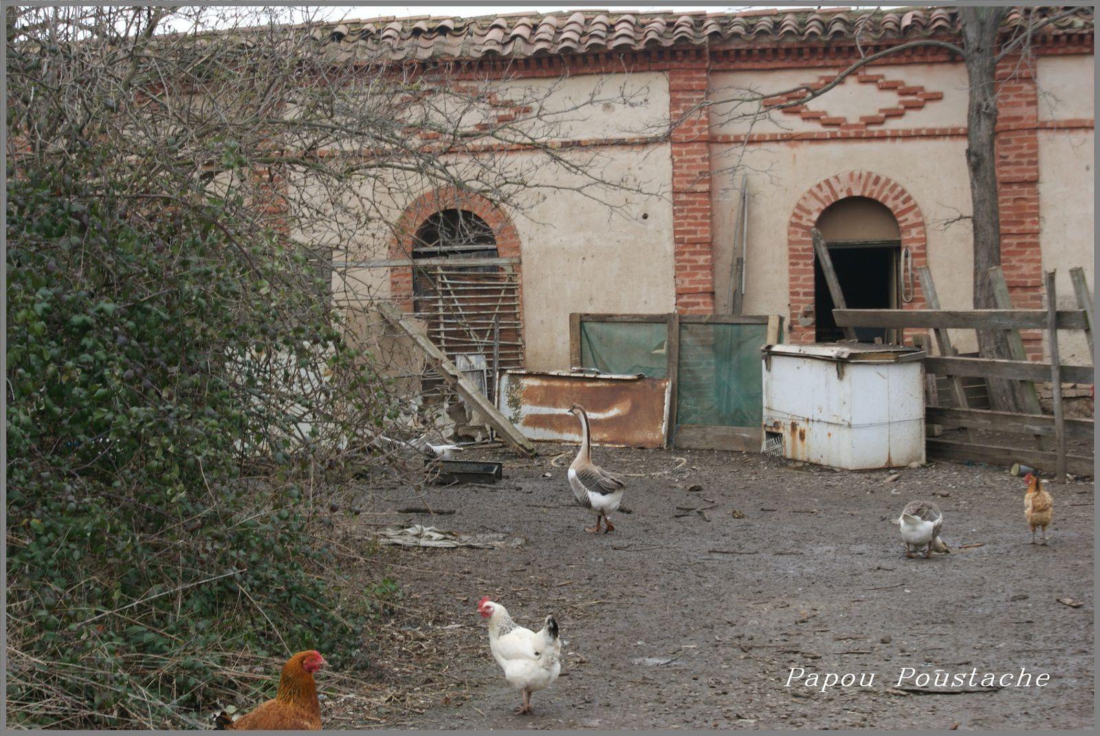 Randonnée entre Couze et  Béal à Saint Germain Lembron