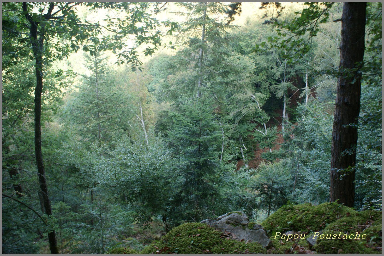 Randonnée du Brame à Arlet