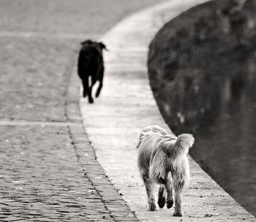 Siamo Animali in corsa sempre pronti a rincorrerci in un'altra vita abbandonando la nostra.