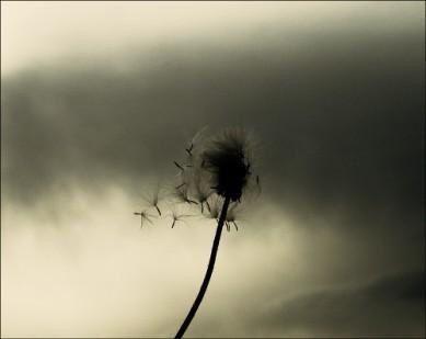 Tutto nasce dalla forza di vita,se ascolti il senso naturale della sua luce.