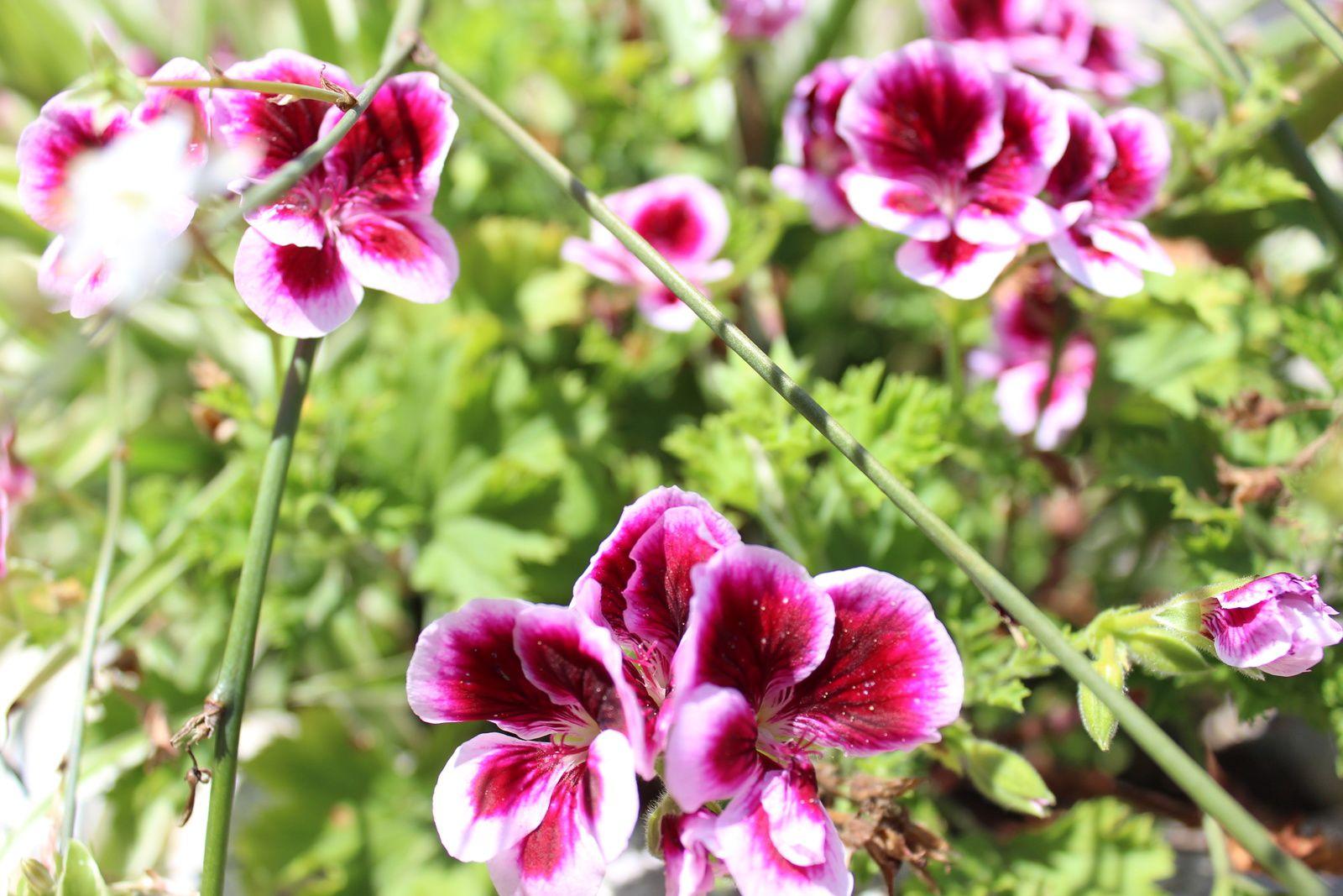 Un jardin dans le Périgord en été