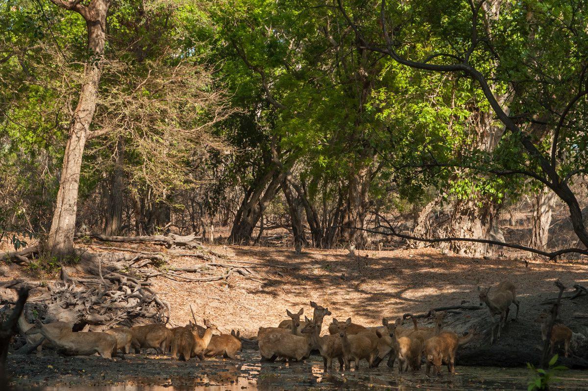JAVA EST - TAKE 4 - Baluran National Park