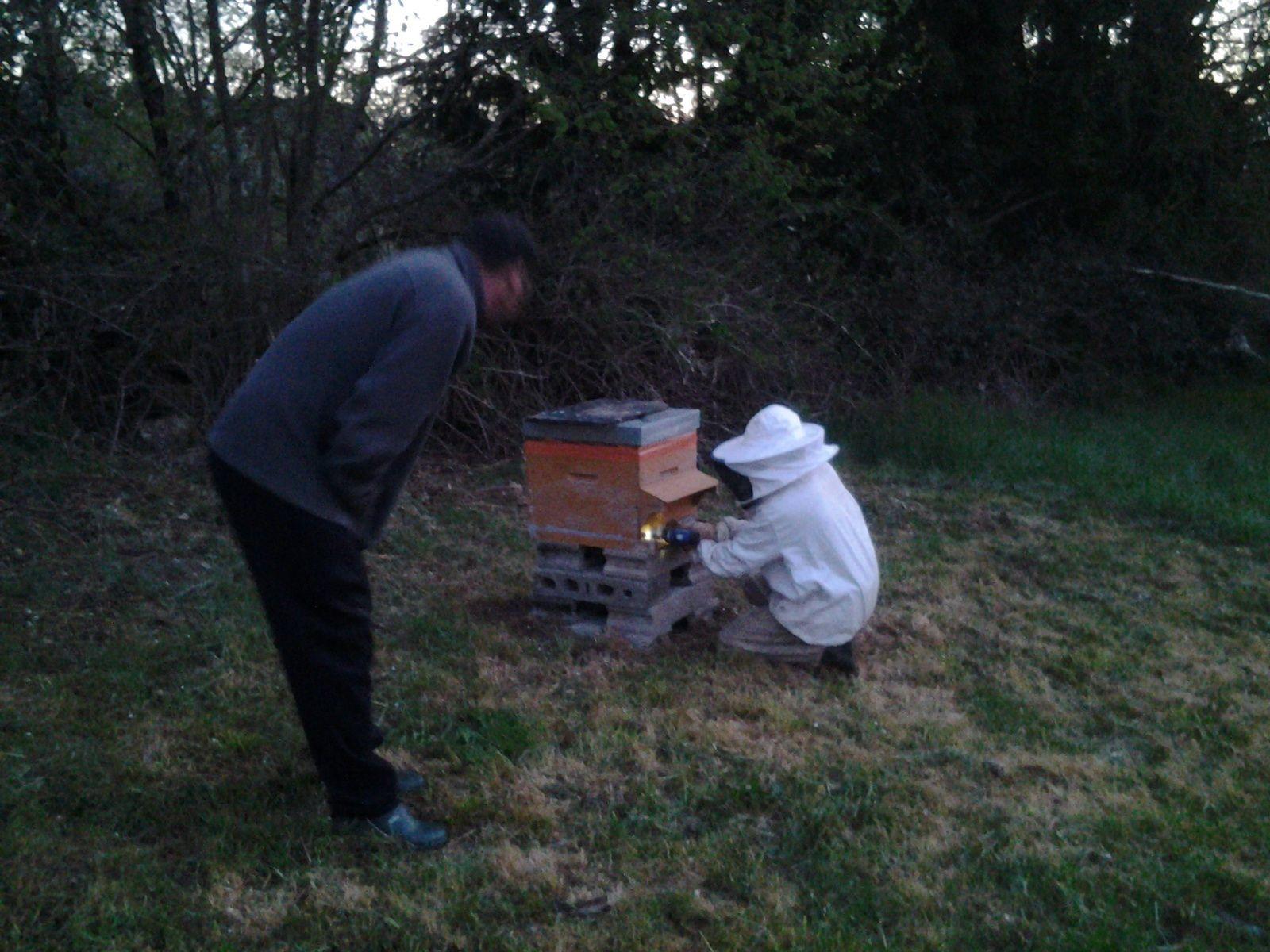 Le rêve de yann est enfin réalisé.  Avoir une ruche et produire son propre miel. Peut être le début d'une passion.