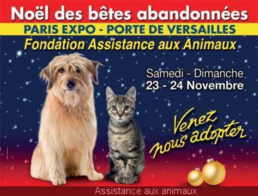 N'achetez pas adoptez....! et surtout reffléchissez bien avant ( nourriture, être disponible tous les jours, frais de vétérinaire honéreux, vacances...)