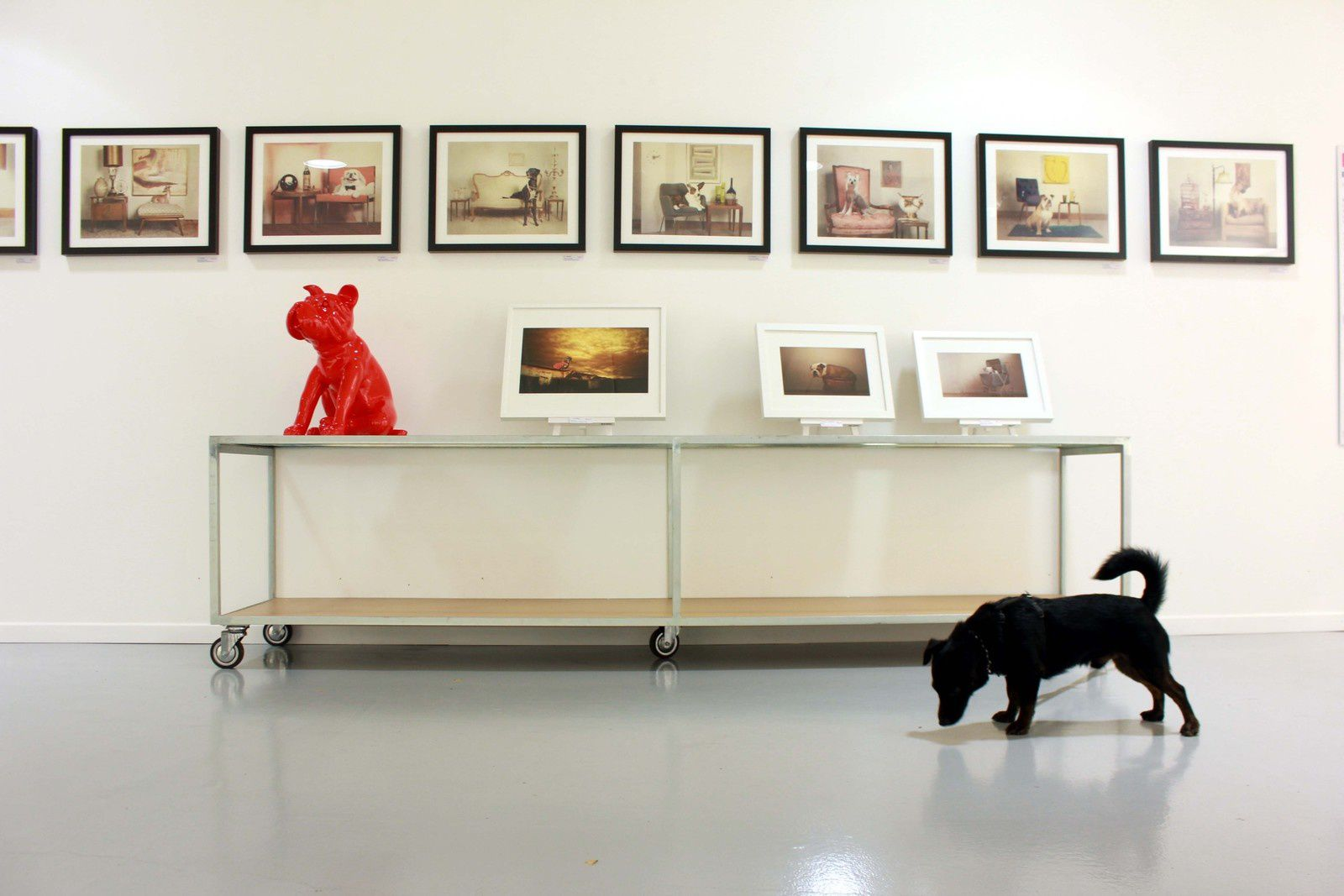 Tibou a l'expo photo Woof