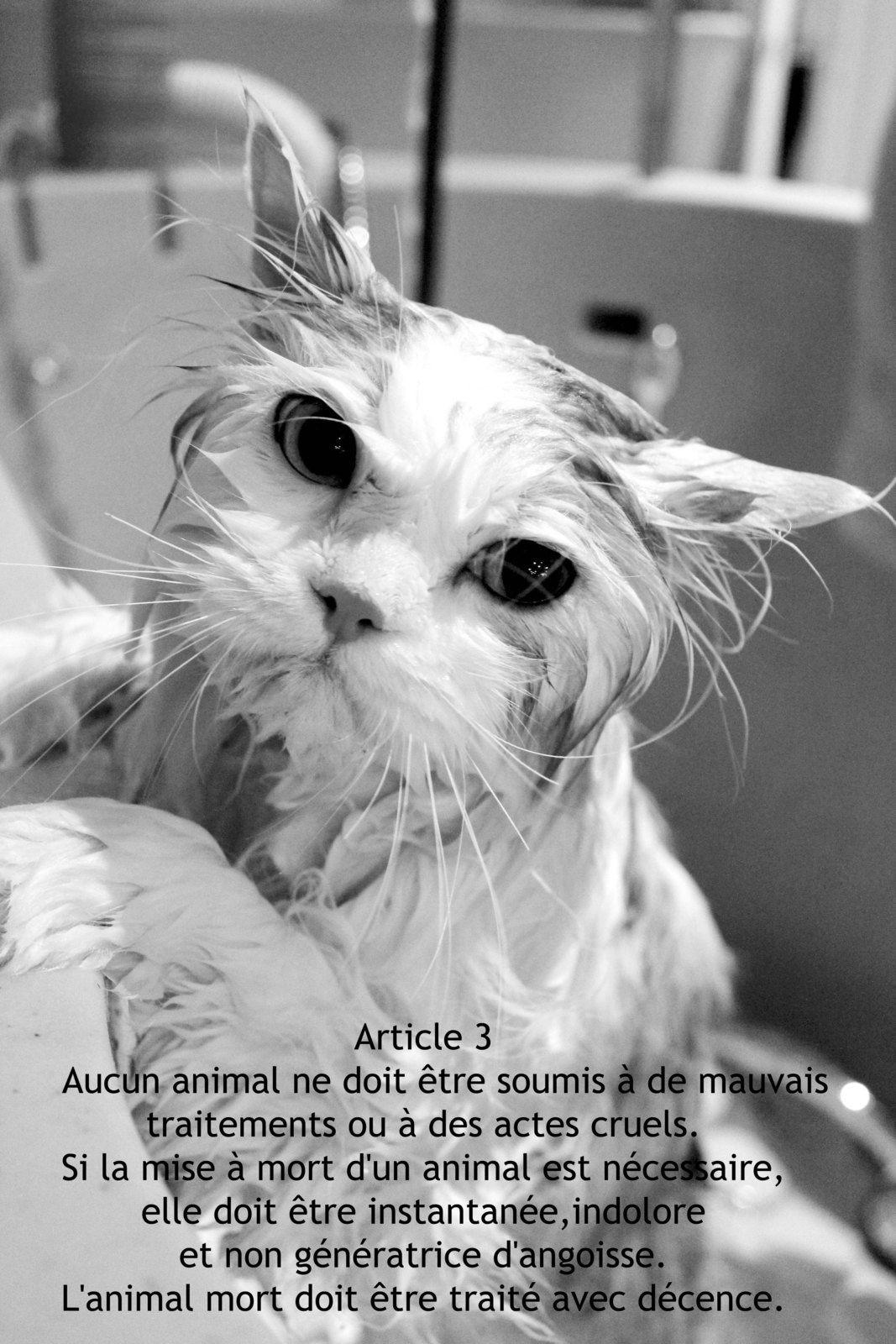 Le droit des animaux illustré