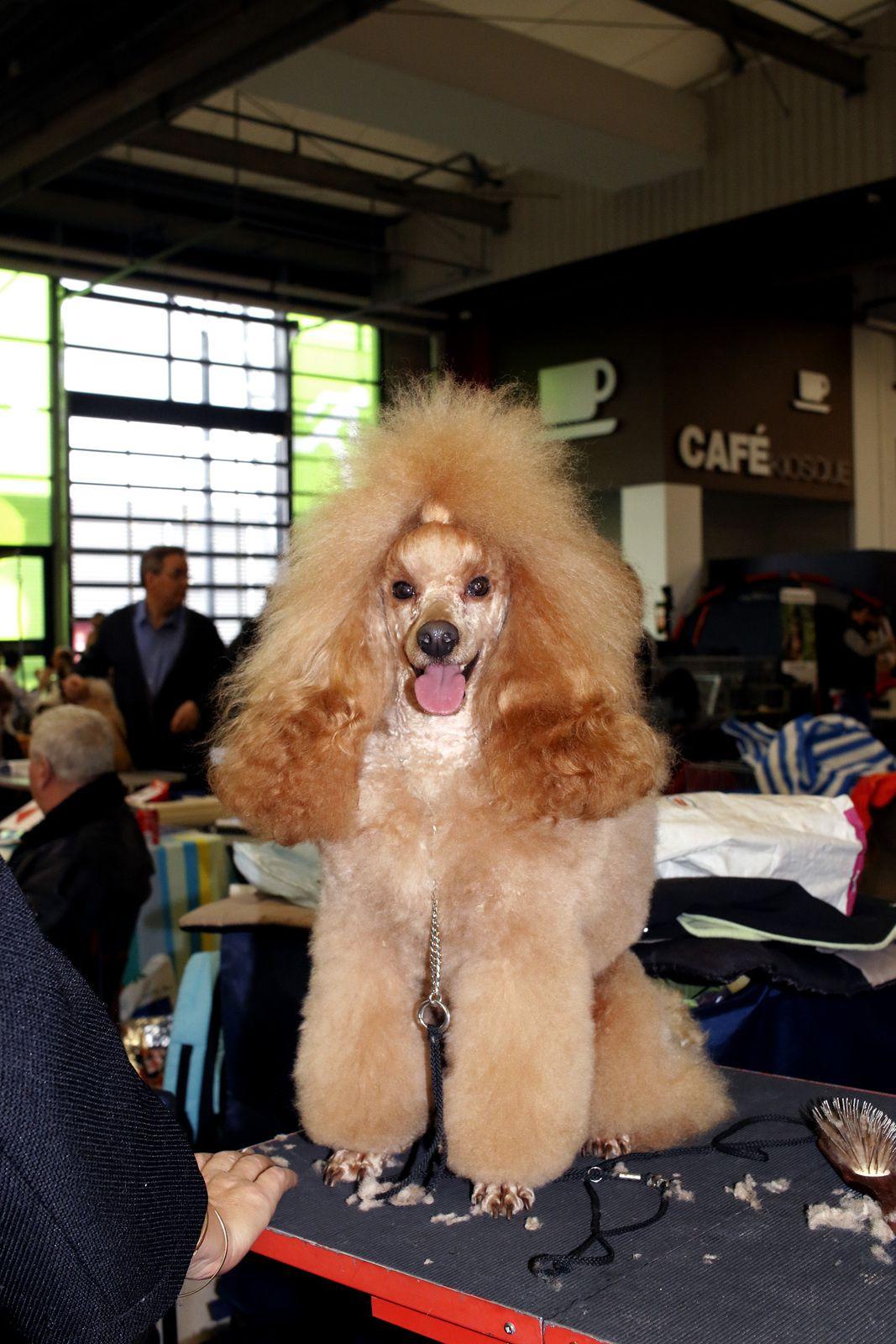 Paris Dog Show 2017