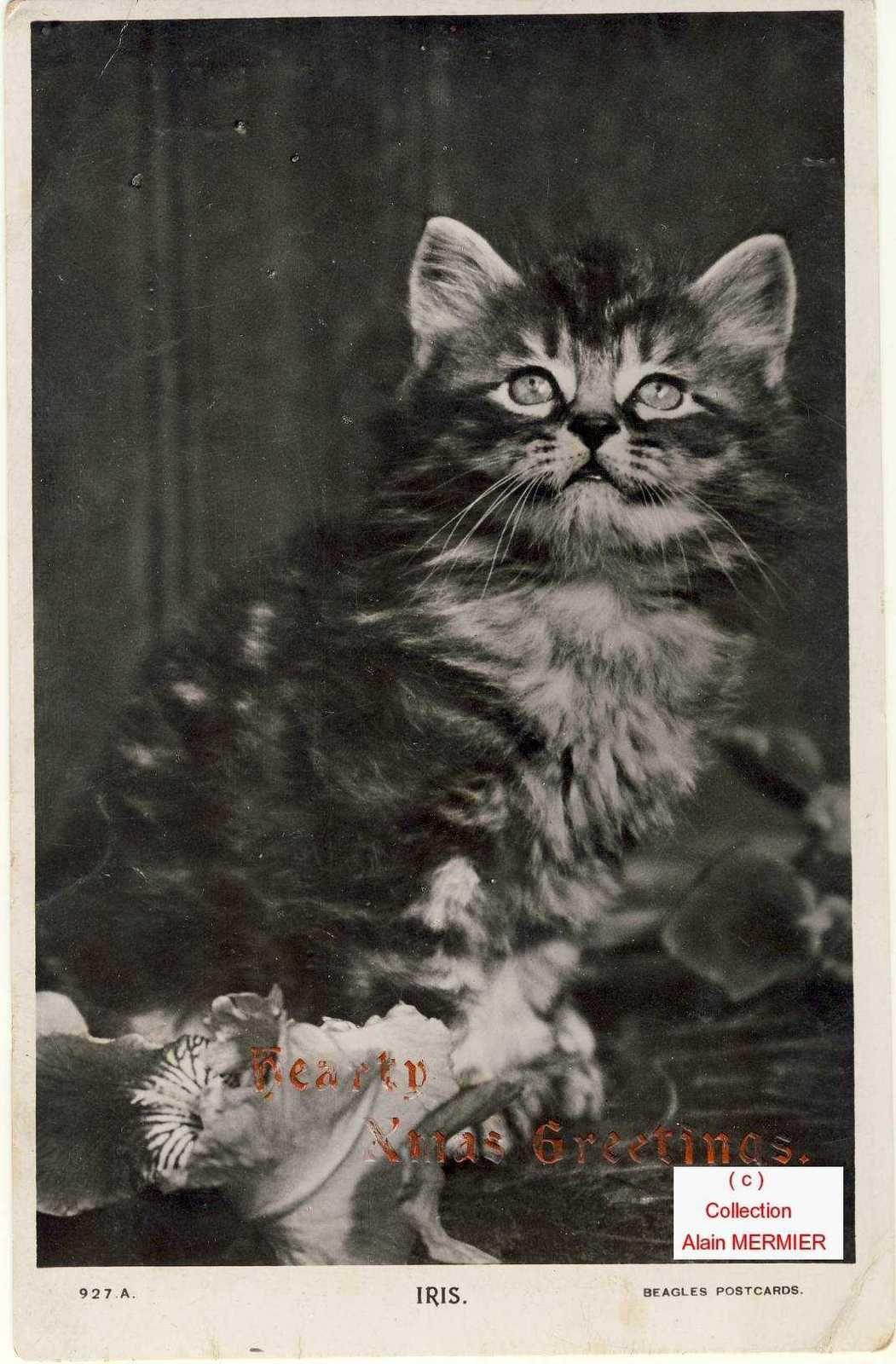 Iris -2227- Hearty Xmas greetings. Cat. USA.
