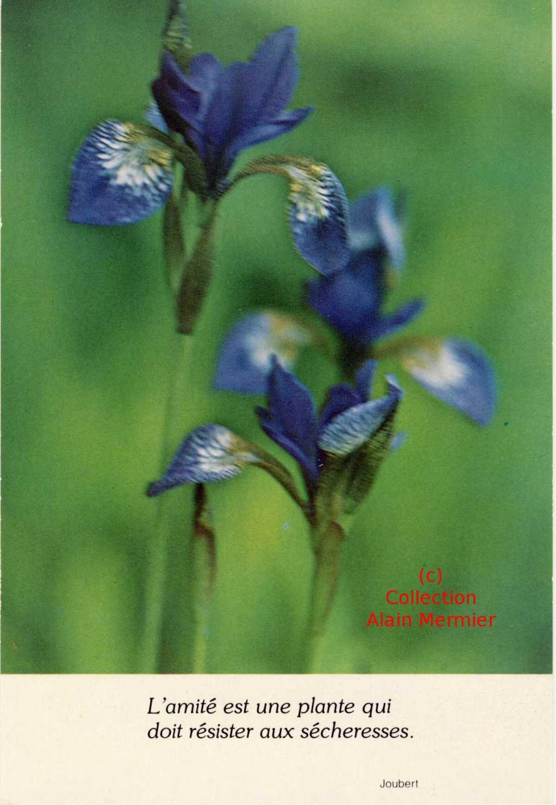 Iris -2221- CPM : L'amitié est une plante...  Belgique.