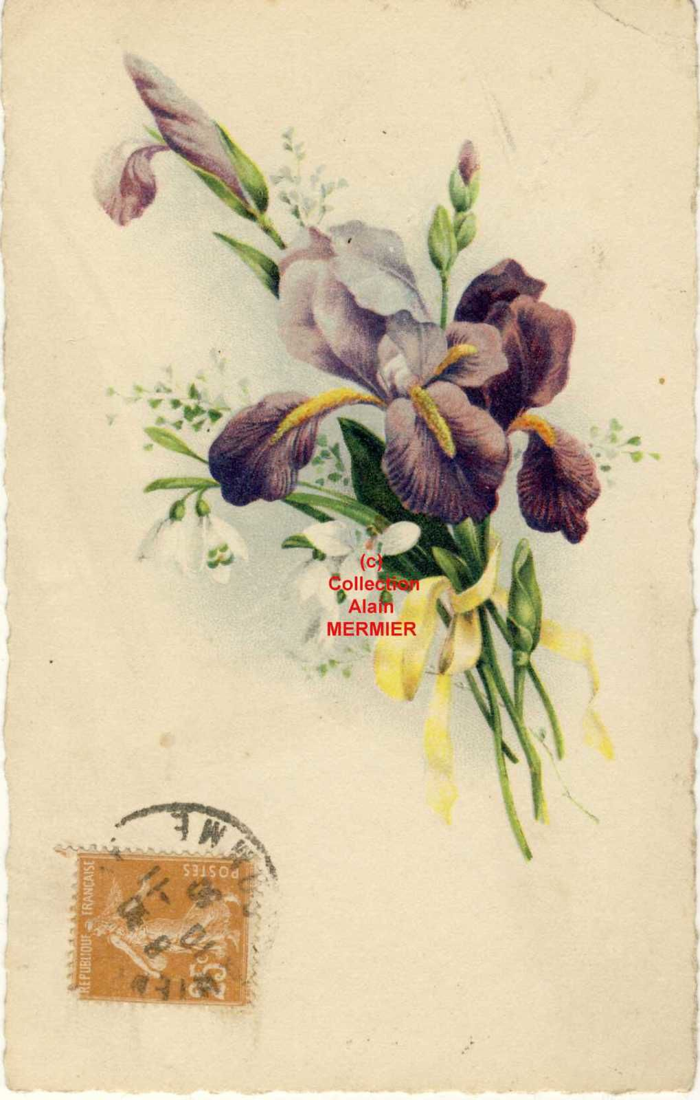 Iris -2184- Carte postale semi moderne. Bouquet. France.1930