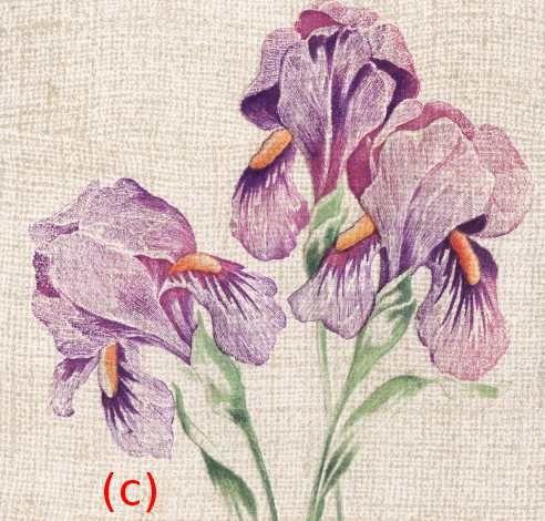 Iris -0756- Happy New Year. Fond simili toile. U.S.A - 1907.