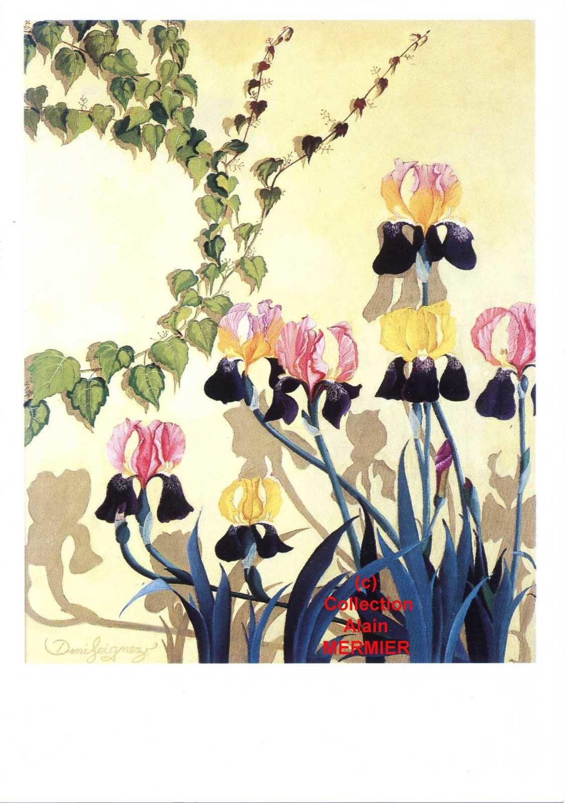 Iris -1934- Carte postale modern : Illustrateur SEIGNEZ Denis. Iris ensoleillés. France. 1989