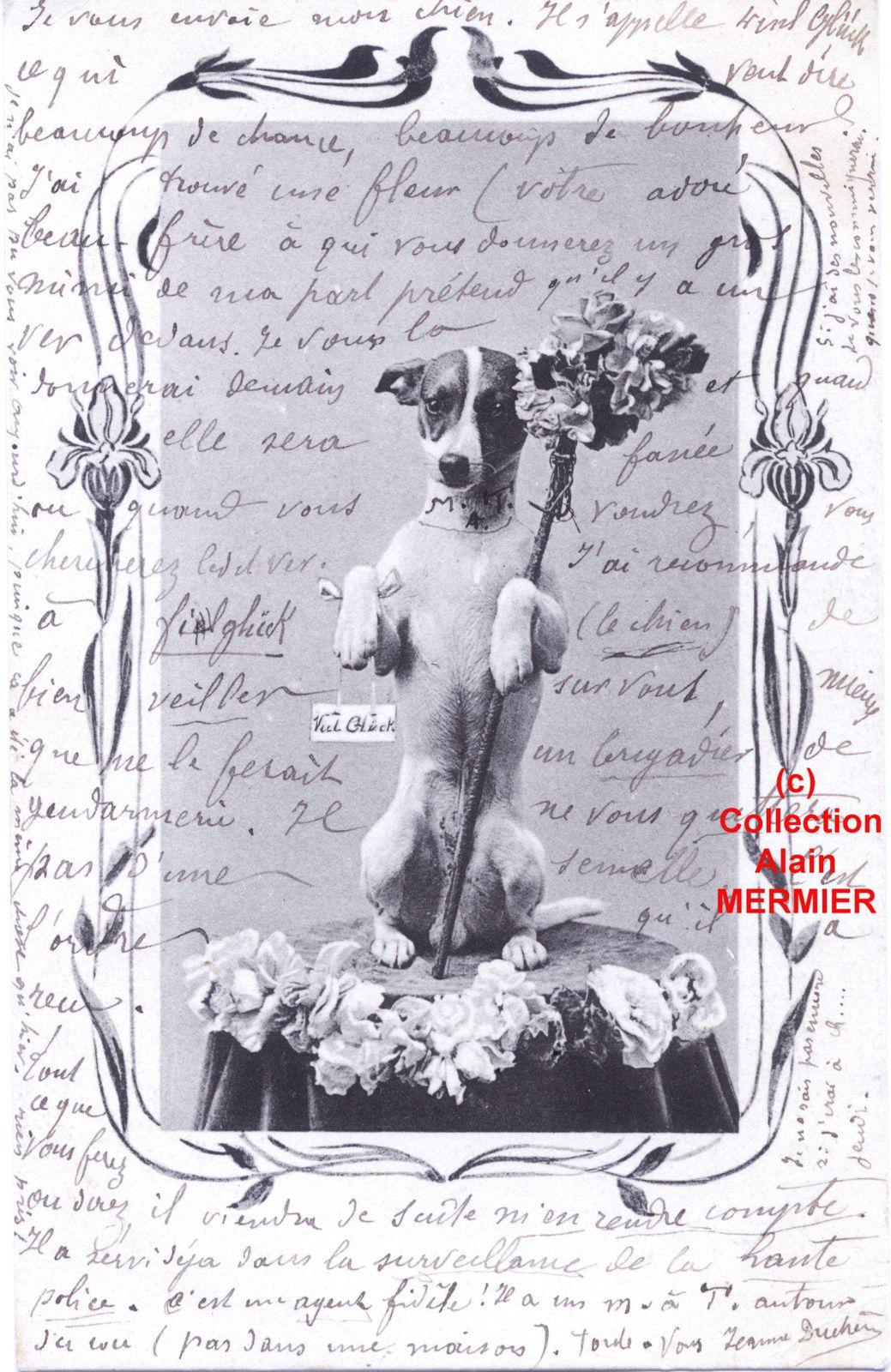Iris -1904- Viel Glück. Chien. Allemagne.
