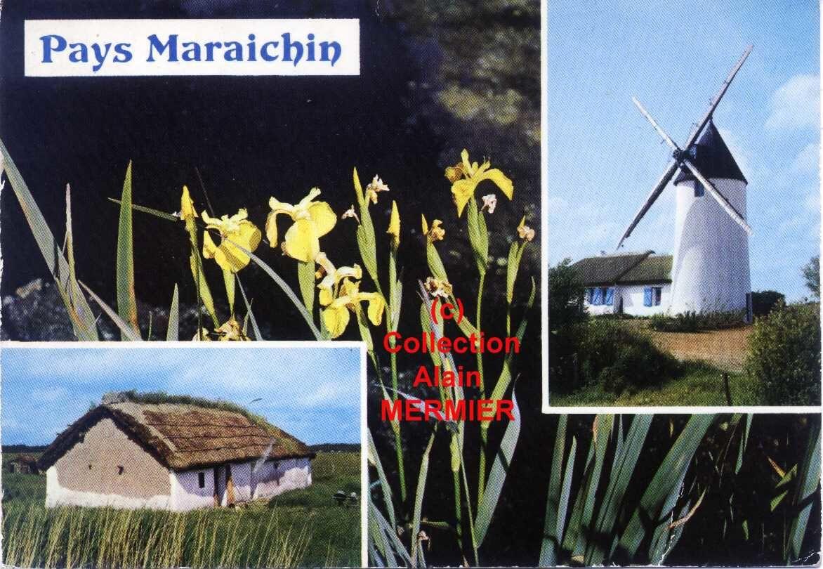 Iris - 1841 - CPM. Pays maraîchin. Iris pseudoricus. France. 1972