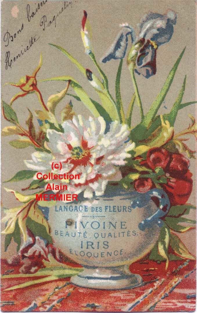 Iris 1797 langage des fleurs pivoine iris france 1904 iris blog par albert ville - Langage des fleurs iris ...