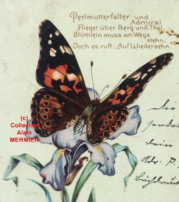 Iris -1720 - Permutterfalter und admiral... . Papillon sur iris. Allemagne.1903.