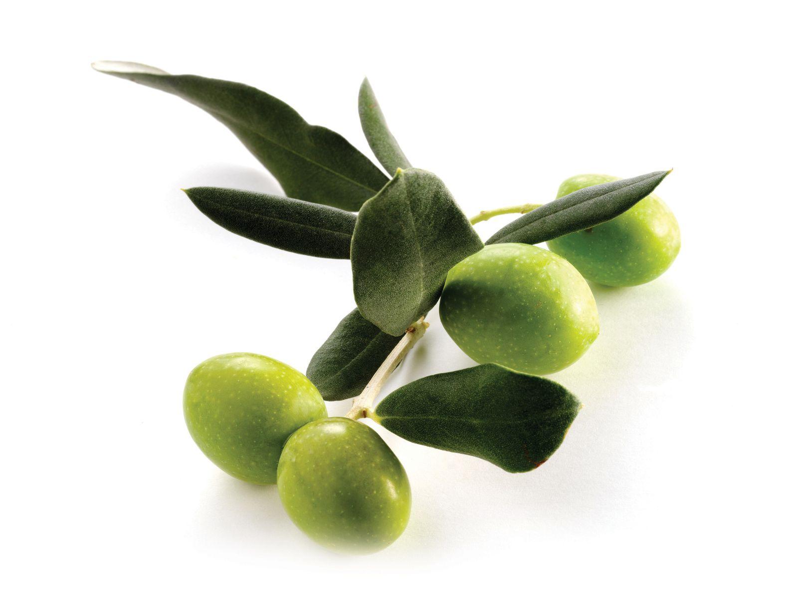 Huile d'olive: Riche en vitamines A, D, E et K, elle adoucit la peau, assouplit les muscles lorsqu'elle est utilisée en massage, donne de l'élasticité à la peau, protège contre les agressions du froid et atténue les rides.    Cheveux : Idéale pour les cheveux secs et fragiles.  Ongles : Excellente pour les ongles cassants.  Type de peau : matures, sèches, délicates, normales, irritées