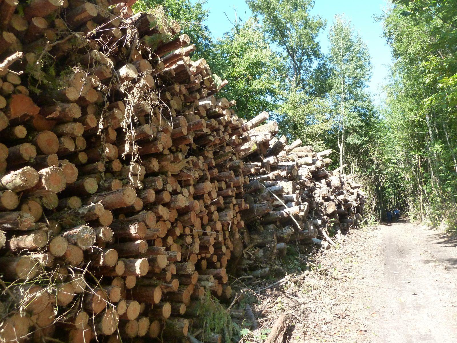 Coupe de bois en cours dans le Bois de Guillayottes.