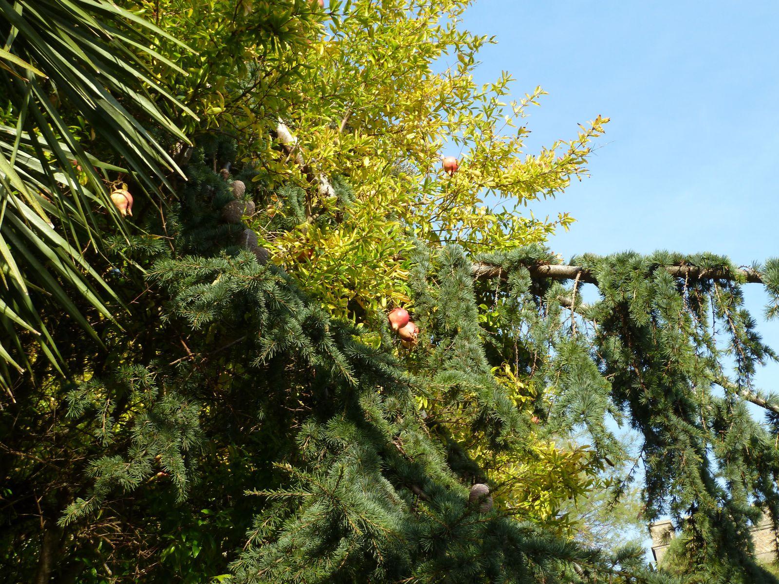 De beaux parterres fleuris et arbres fruitiers exotiques, une remarquable végétation méditerranéenne l'agrémentent.