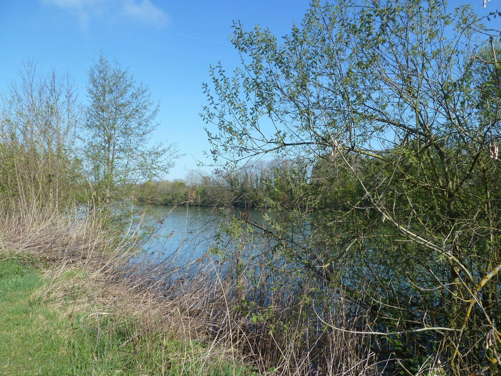 Nous atteignons rapidement les bords de Seine, des panneaux explicatifs sur la faune et la flore sont installés le long du cours d'eau.