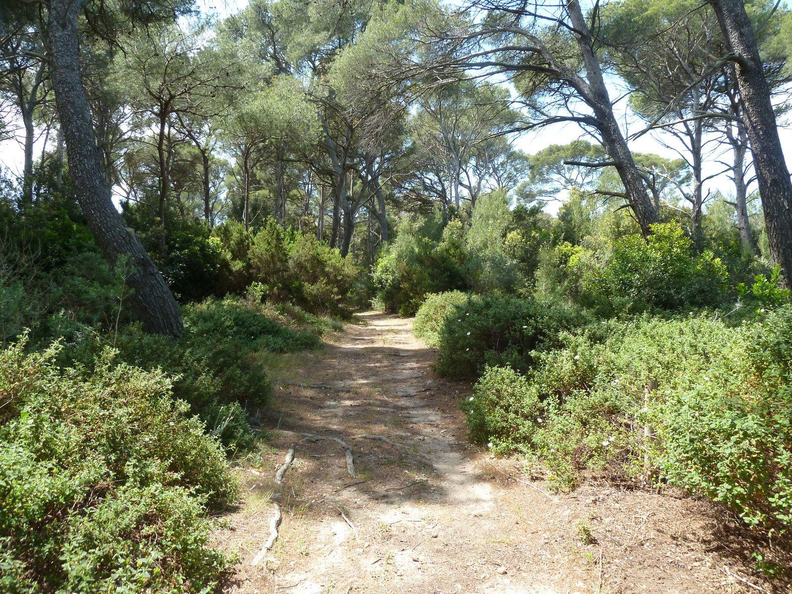 Nous reprenons notre chemin pas le sentier surplombant la plage en direction de l'intérieur de l'île.