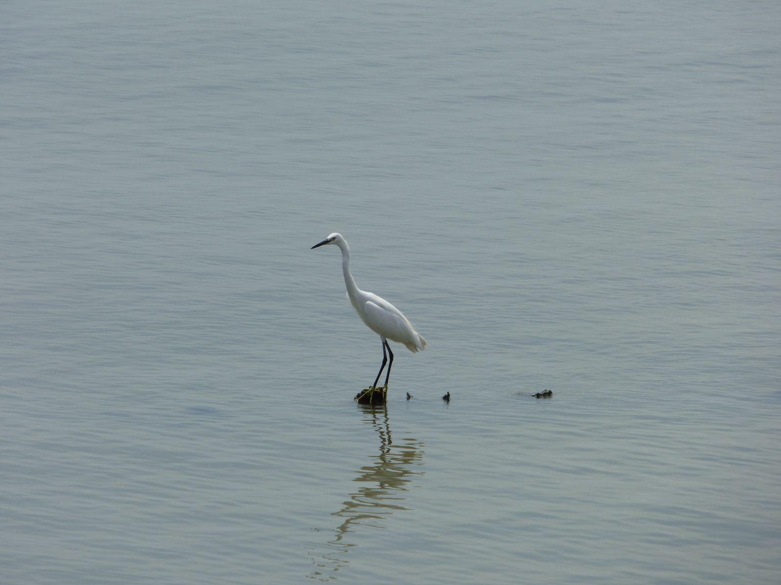 Mangrove reserve park 红树林海滨生态公园, Shenzhen 深圳