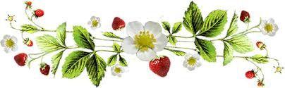 Clafoutis au yaourt, fraises et rhubarbe