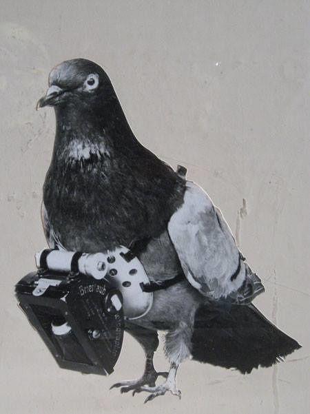 On peignait les pigeons en noir pour les déguiser en corbeaux. https://www.facebook.com/1554253891457697/photos/pb.1554253891457697.-2207520000.1456070890./1705441046338980/?type=3&theater