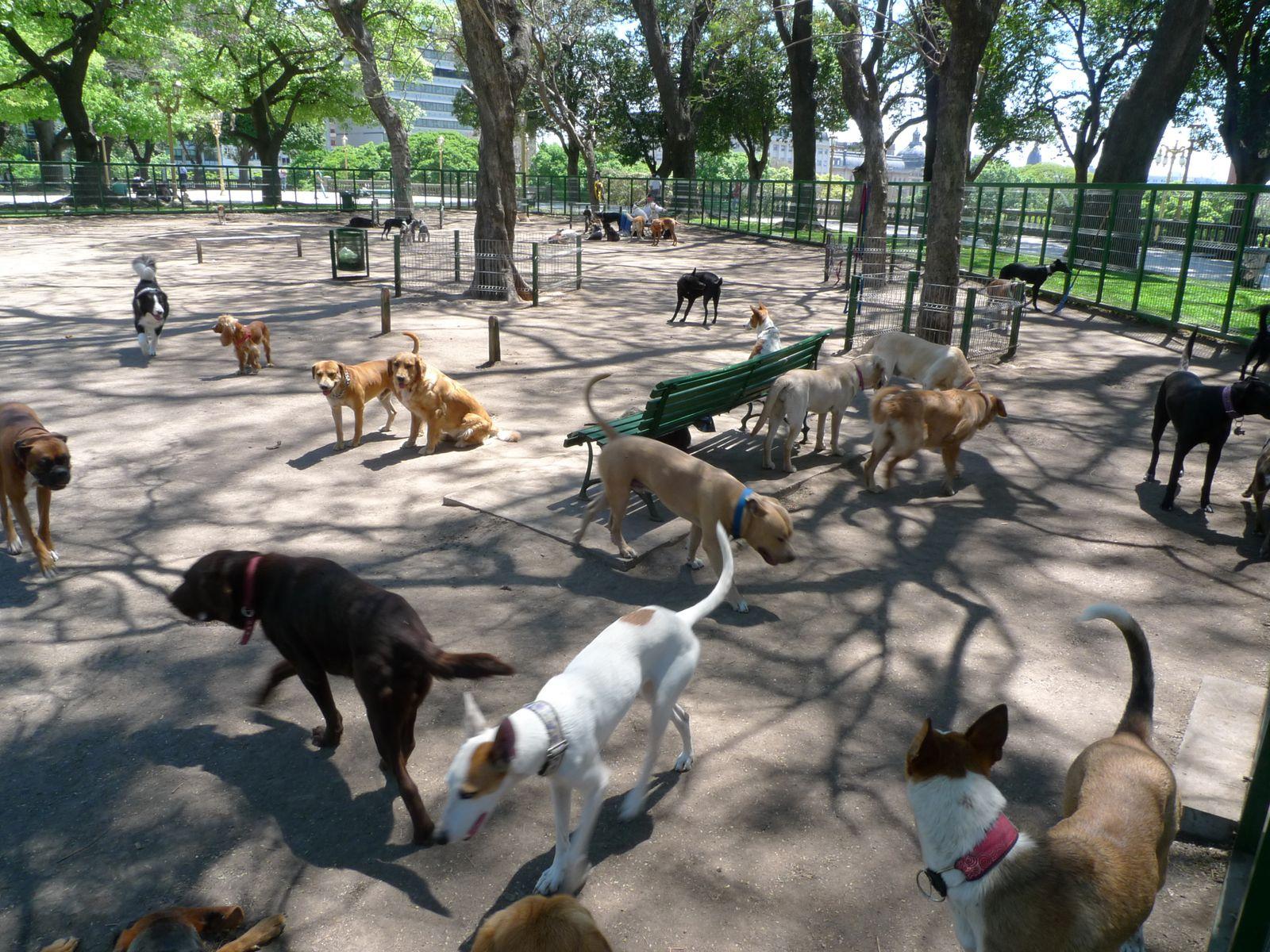 Place San Martin et garderie pour chiens