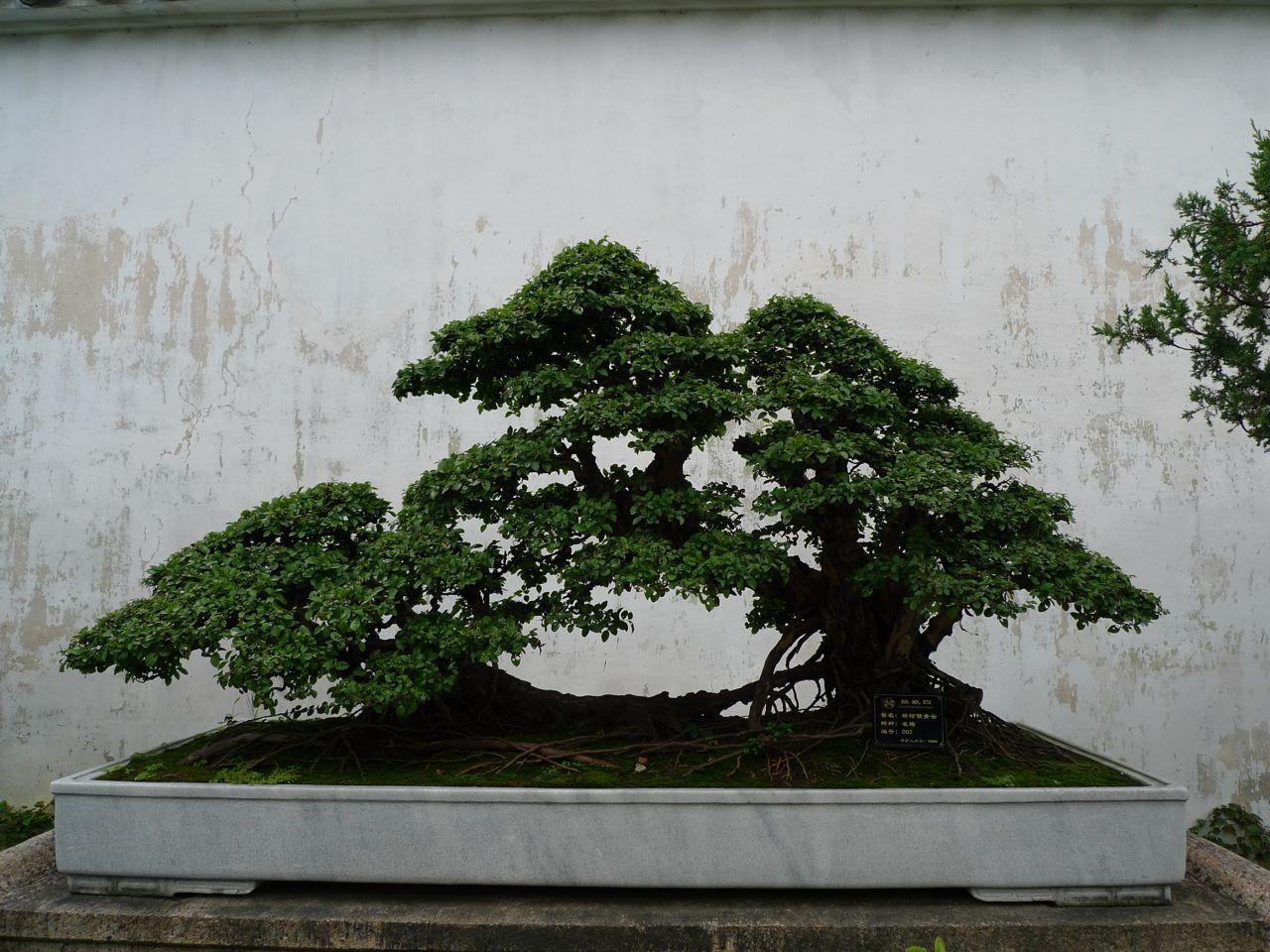Suzhou les jardins