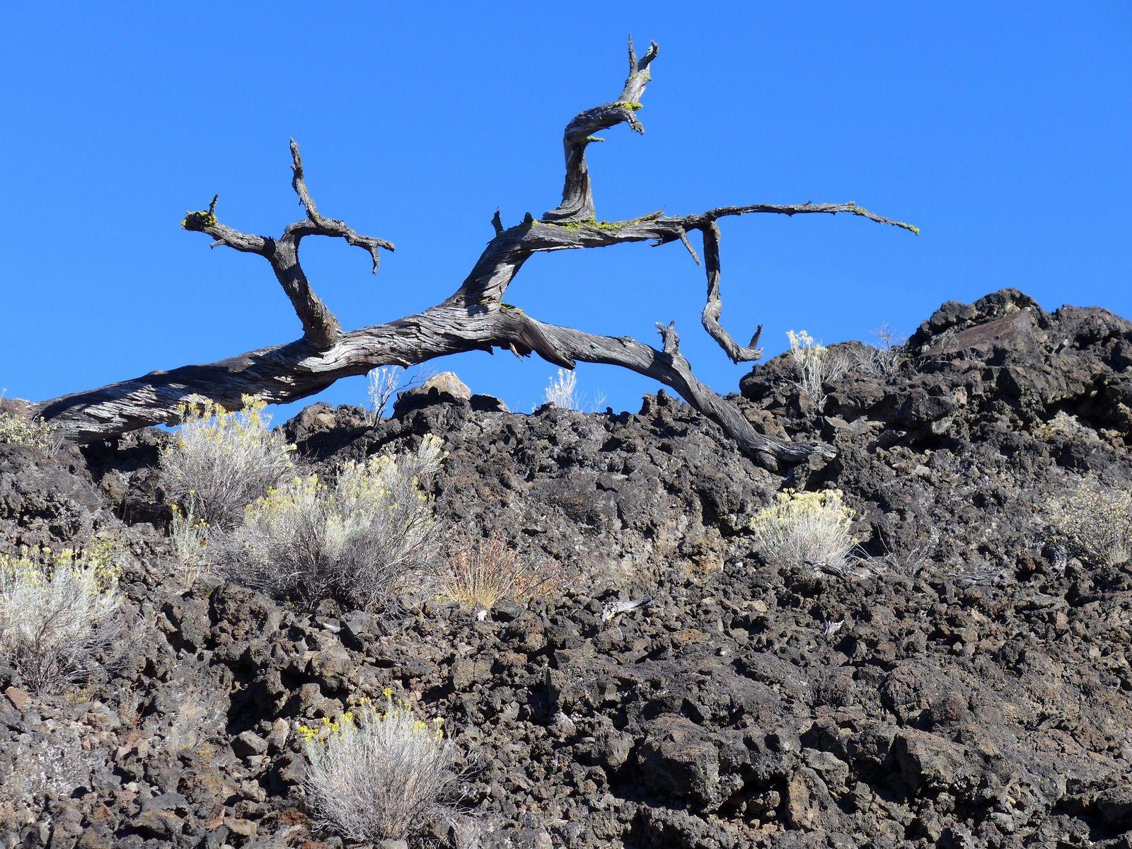 Le  volcan Newberry et ses coulées de lave