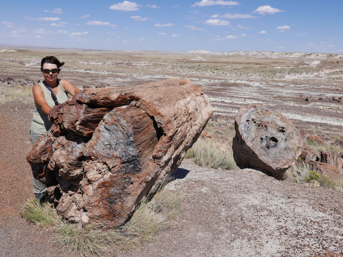 Painted Desert et Petrified Forest