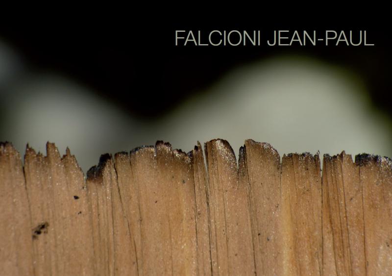 Jean-Paul Falcioni à la Tour lombarde, force et fluidité d'un artiste polyvalent
