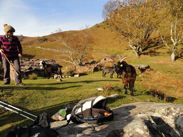 Mehatxe-Ichusi. Entre chèvres et vautours dans la montagne escarpée.10 décembre 2015.