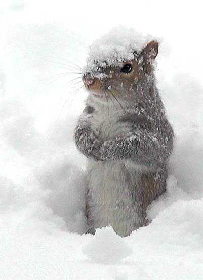 Le plaisir de jouer dans la neige!