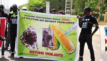 De Paris à Ouagadougou et Rio, mobilisation de milliers de manifestants contre Monsanto (AFP)