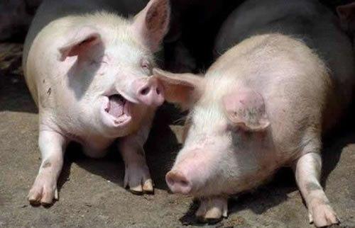 «C'est un porc, un escroc, un abruti, une honte pour ce pays»
