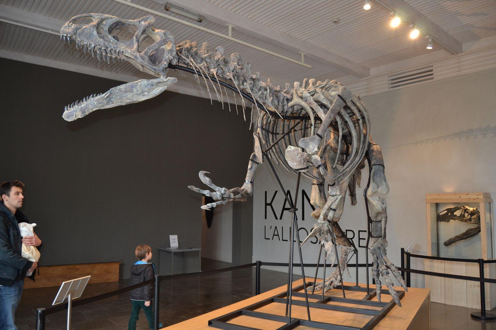 Les carnivores étaient, de plus, beaucoup moins nombreux que les herbivores. Les fossiles de dinosaures carnivores sont rarissimes parce qu'ils étaient, à l'époque, une minorité au sein d'espèces largement herbivores...