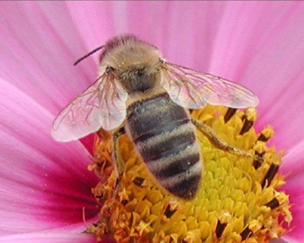 abeille miel happy 39 culture. Black Bedroom Furniture Sets. Home Design Ideas