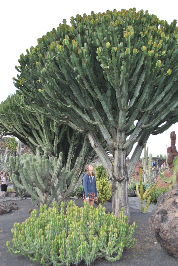 Lanzarote, une île où il fait bon de vivre..