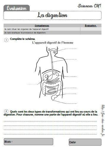 évaluation la digestion CM1