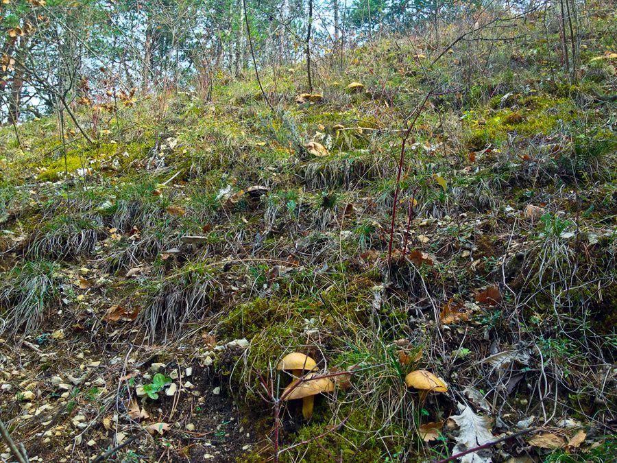 Une journée d'escalade qui se termine en divagations forestière...
