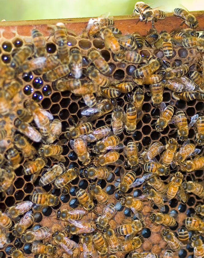 Visite de la ruche du 17 juillet 2014